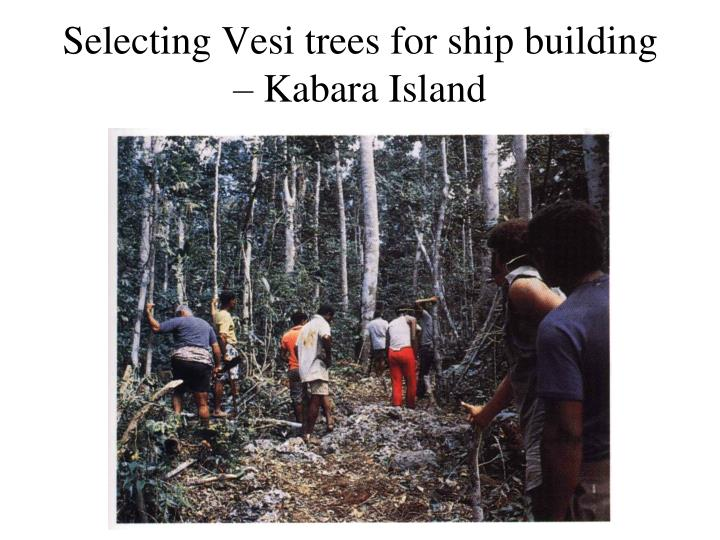 Selecting Vesi trees for ship building – Kabara Island