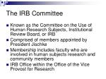 the irb committee