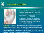 a c psula articular