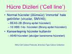 h cre dizileri cell line
