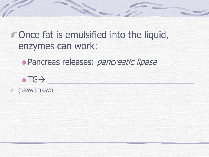 Once fat is emulsified into the liquid, enzymes can work: