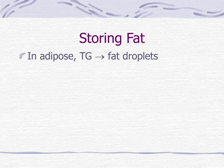 Storing Fat