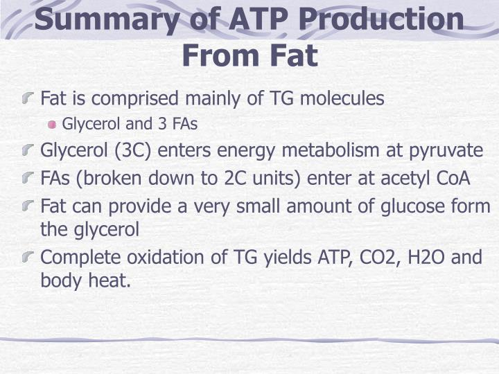 Summary of ATP Production From Fat