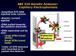 abi 310 genetic analyzer capillary electrophoresis