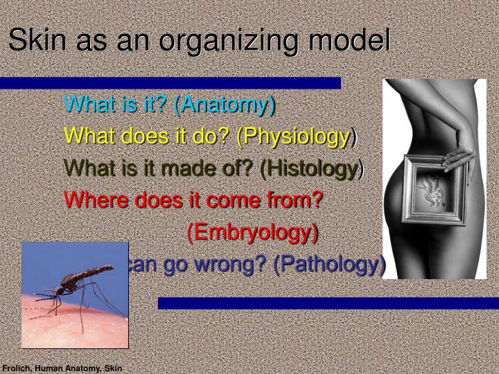 skin as an organizing model n.