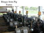 biogas from pig farms1