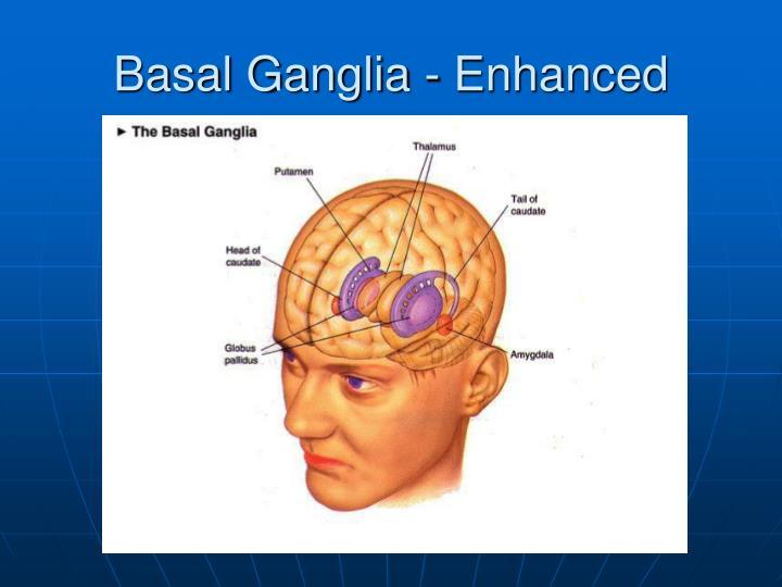 Basal Ganglia - Enhanced