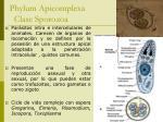 phylum apicomplexa clase sporozoa