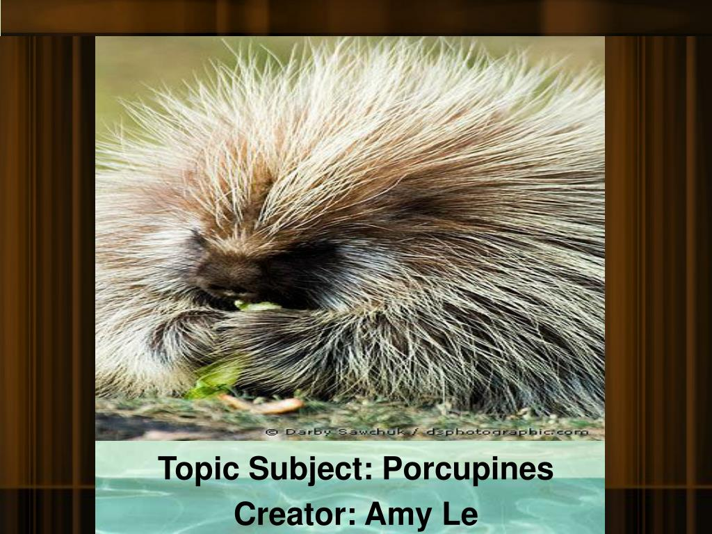 topic subject porcupines creator amy le l.