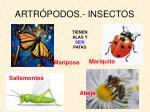 artr podos insectos