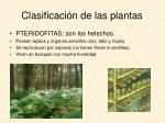 clasificaci n de las plantas1