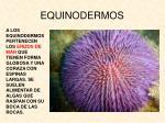 equinodermos1
