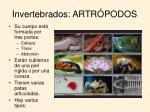 invertebrados artr podos