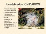invertebrados cnidarios