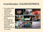 invertebrados equinodermos