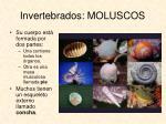 invertebrados moluscos