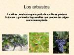 los arbustos