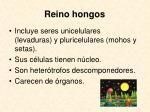 reino hongos