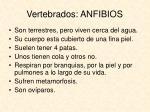 vertebrados anfibios