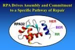 rpa drives assembly and commitment to a specific pathway of repair