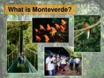 what is monteverde
