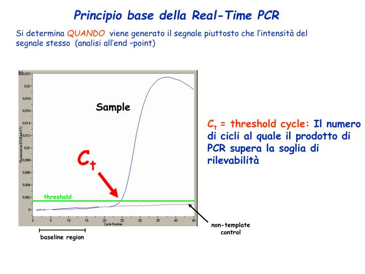 Principio base della Real-Time PCR