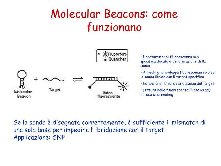 Molecular Beacons: come funzionano