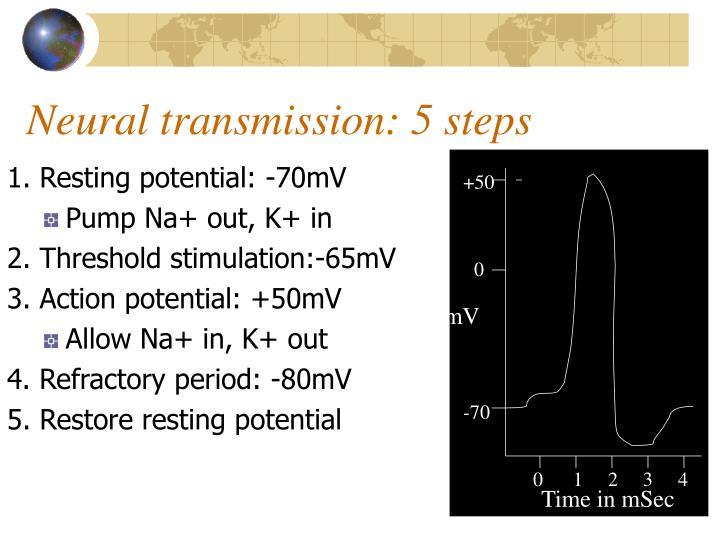 Neural transmission 5 steps