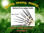 about 30 000 quills per porcupine