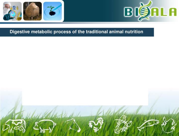 Digestive metabolic process of the traditional animal nutrition