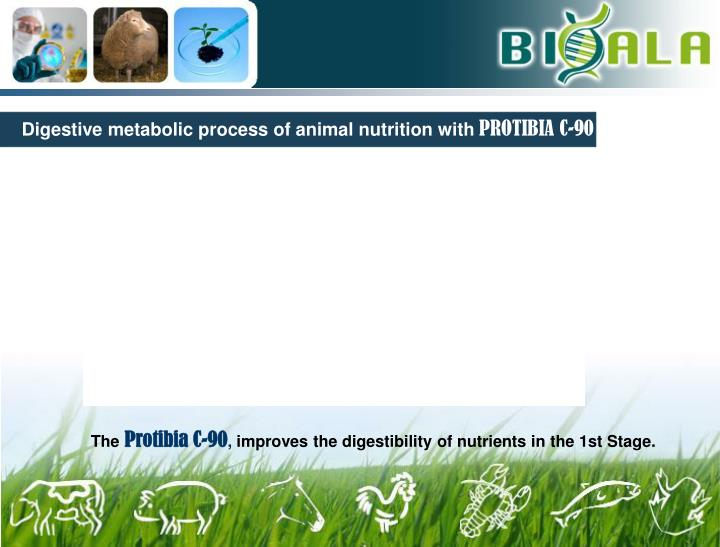 Digestive metabolic process of animal nutrition with