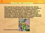 flores da caatinga