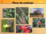 flores da caatinga1