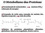 o metabolismo das prote nas