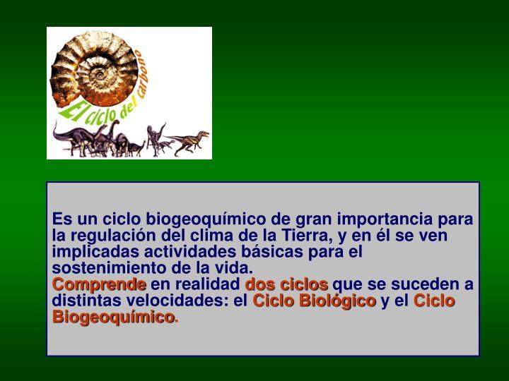 Es un ciclo biogeoquímico de gran importancia para la regulación del clima de la Tierra, y en él se ven implicadas actividades básicas para el sostenimiento de la vida.