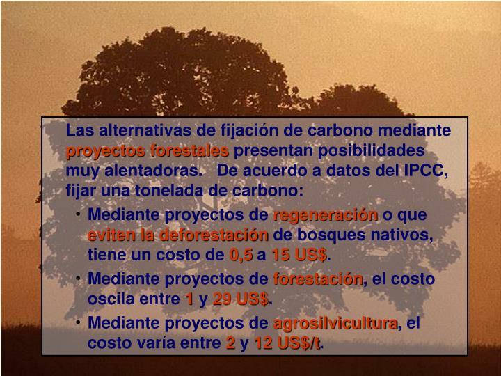 Las alternativas de fijación de carbono mediante