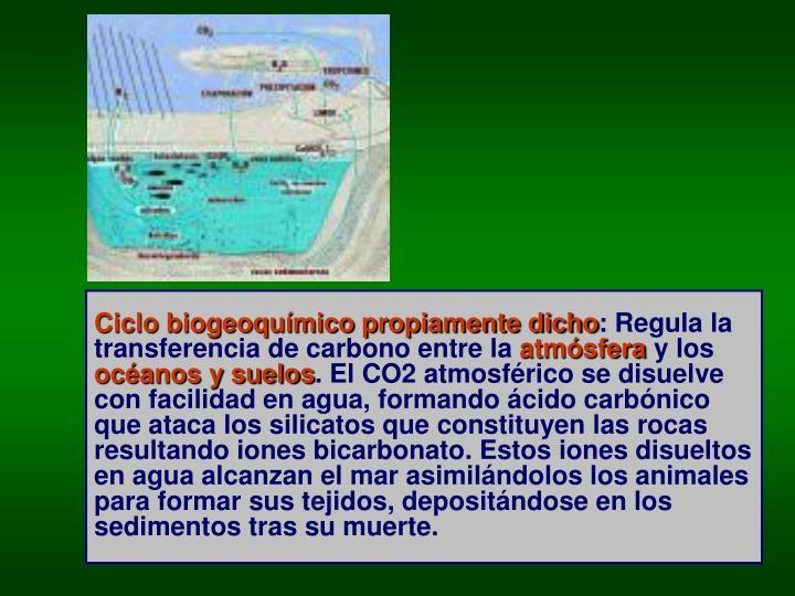 Ciclo biogeoquímico propiamente dicho
