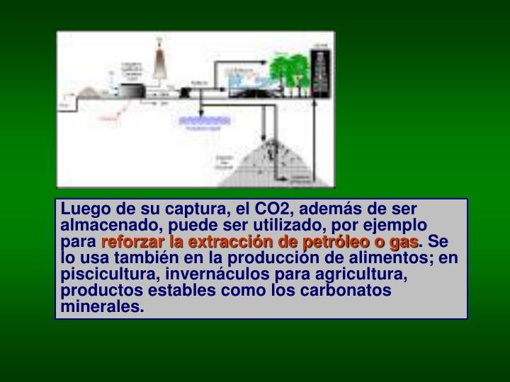 Luego de su captura, el CO2, además de ser almacenado, puede ser utilizado, por ejemplo para