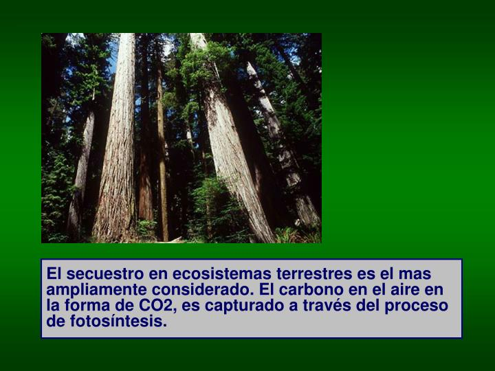 El secuestro en ecosistemas terrestres es el mas ampliamente considerado. El carbono en el aire en la forma de CO2, es capturado a través del proceso de fotosíntesis.