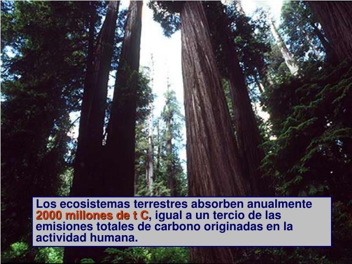 Los ecosistemas terrestres absorben anualmente