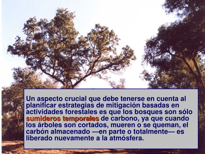 Un aspecto crucial que debe tenerse en cuenta al planificar estrategias de mitigación basadas en actividades forestales es que los bosques son sólo