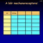 a b r mechanoreceptorai