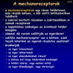 a mechanoreceptorok