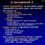 a nociceptorok i