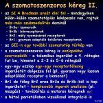 a szomatoszenzoros k reg ii