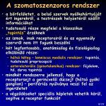 a szomatoszenzoros rendszer