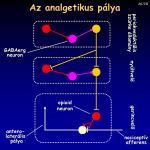 az analgetikus p lya