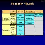 receptor t pusok
