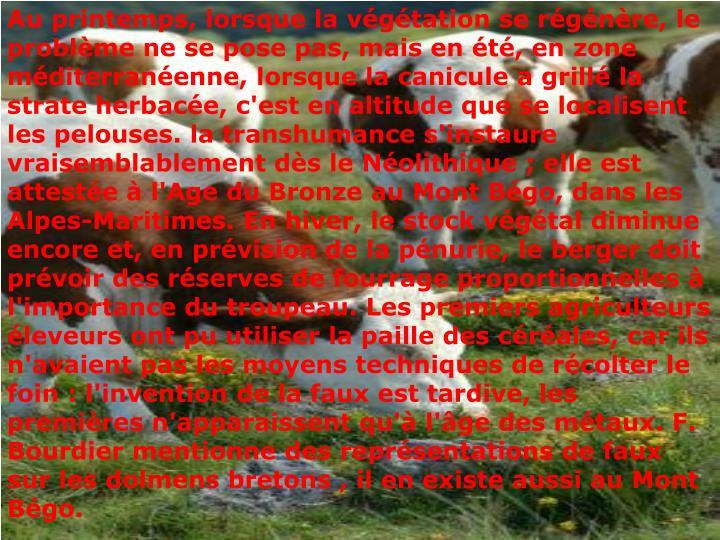 Au printemps, lorsque la végétation se régénère, le problème ne se pose pas, mais en été, en zone méditerranéenne, lorsque la canicule a grillé la strate herbacée, c'est en altitude que se localisent les pelouses. la transhumance s'instaure vraisemblablement dès le Néolithique ; elle est attestée à l'Age du Bronze au Mont Bégo, dans les Alpes-Maritimes. En hiver, le stock végétal diminue encore et, en prévision de la pénurie, le berger doit prévoir des réserves de fourrage proportionnelles à l'importance du troupeau. Les premiers agriculteurs éleveurs ont pu utiliser la paille des céréales, car ils n'avaient pas les moyens techniques de récolter le foin : l'invention de la faux est tardive, les premières n'apparaissent qu'à l'âge des métaux. F. Bourdier mentionne des représentations de faux sur les dolmens bretons , il en existe aussi au Mont Bégo.