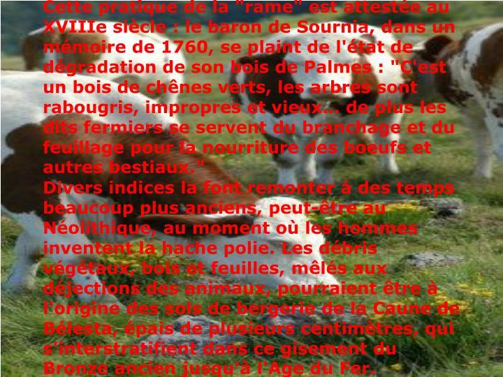 """Cette pratique de la """"rame"""" est attestée au XVIIIe siècle : le baron de Sournia, dans un mémoire de 1760, se plaint de l'état de dégradation de son bois de Palmes : """"C'est un bois de chênes verts, les arbres sont rabougris, impropres et vieux… de plus les dits fermiers se servent du branchage et du feuillage pour la nourriture des boeufs et autres bestiaux."""""""